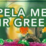mr green turnering golden fish